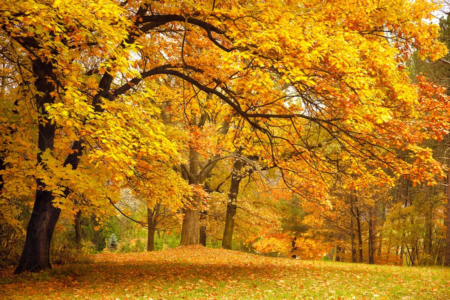 Under the Thriving Brown, Autumn time, Autumn leaves